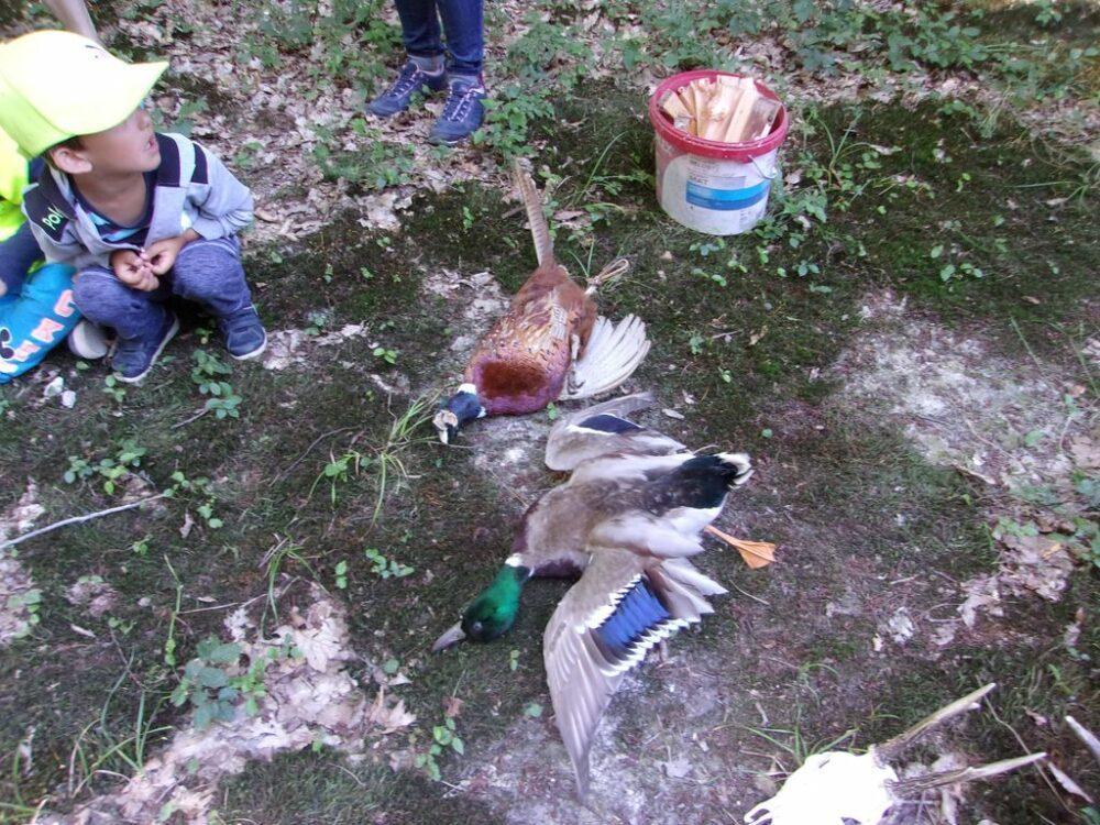 Výlet vláčkem k Jakubskému rybníku 20. 6. 2018